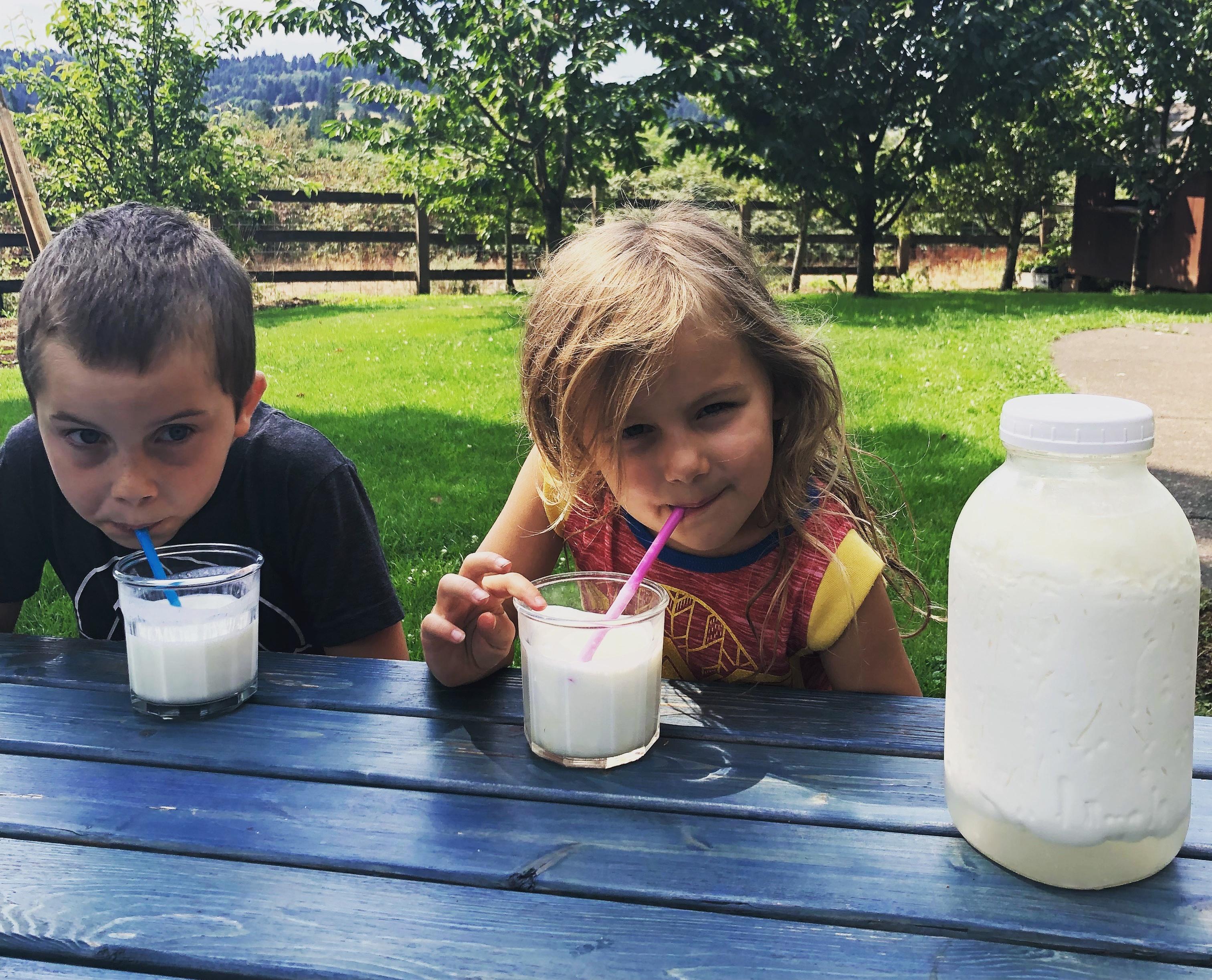 Kefir Grains for Milk, Coconut Milk and More