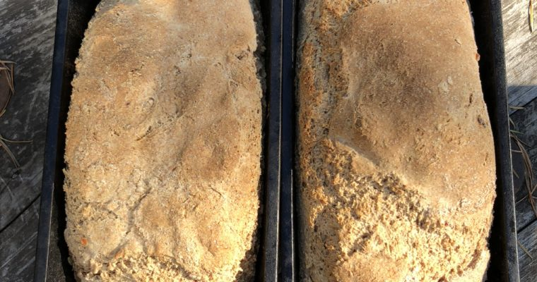Honey Kefir Sandwich Loaf  (Ancient Grains, Nut-Free)